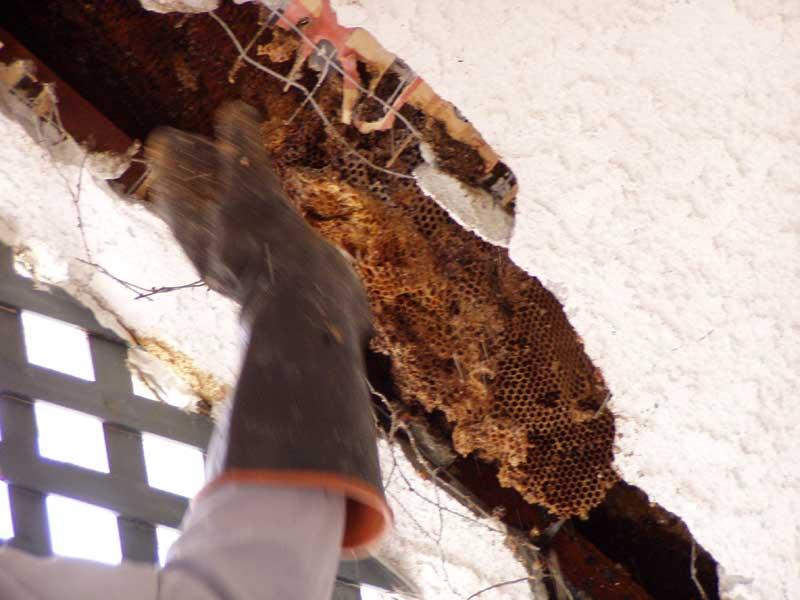 Abolish Pest Control Bee Gallery